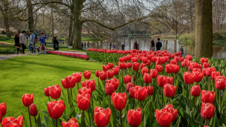 Keukenhof is closing a successful season
