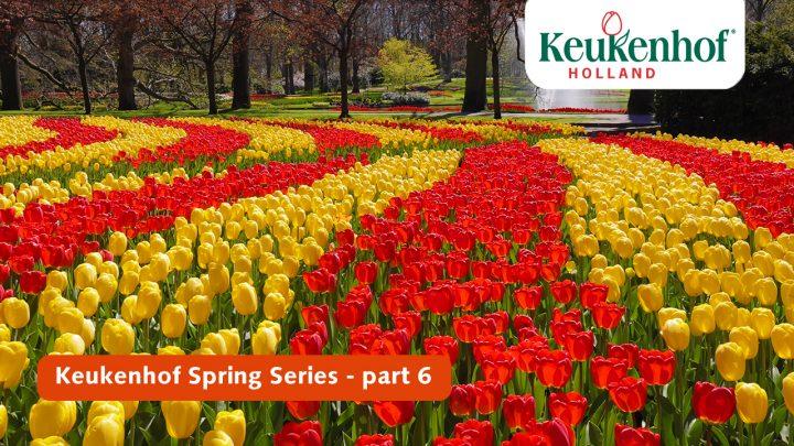 Keukenhof Frühling Serie - April 30