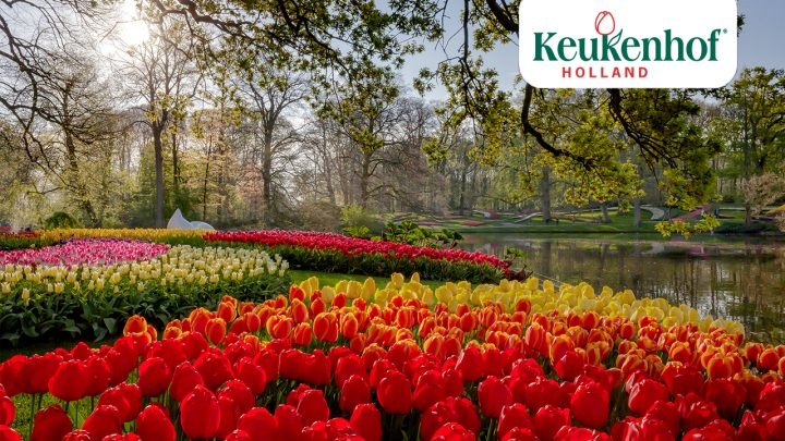 Keukenhof looks back on 2020 with a sense of pride