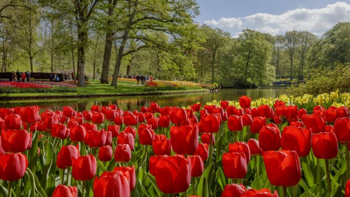 Keukenhof virtually open