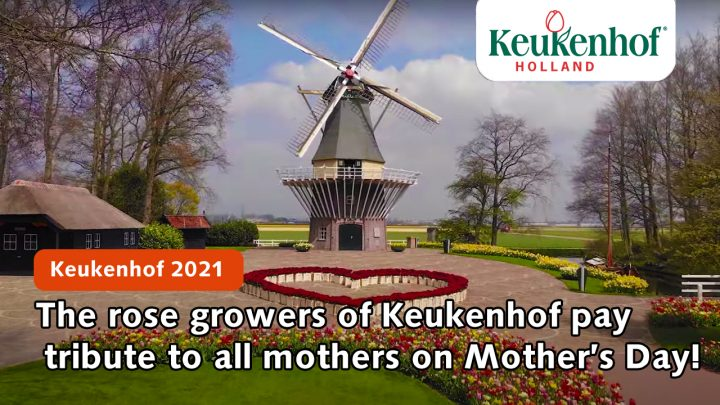The rose growers of Keukenhof pay tribute to all mothers on Mother's Day