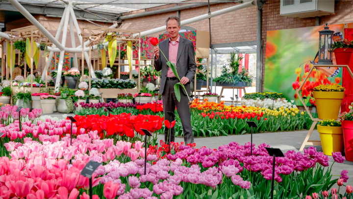 Director Bart Siemerink about the different types of tulips