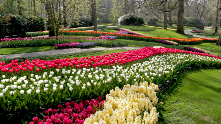 Keukenhof opens virtually!