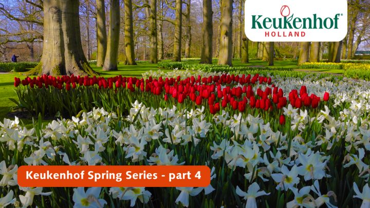 Keukenhof Spring Series - April 13