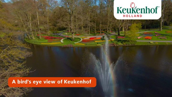 A bird's eye view of Keukenhof