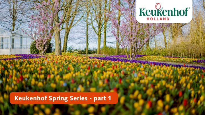 Keukenhof Spring Series - March 23