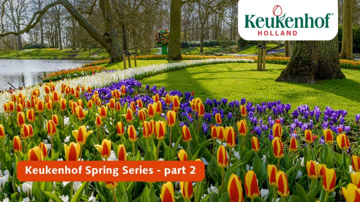 Keukenhof Spring Series - March 30