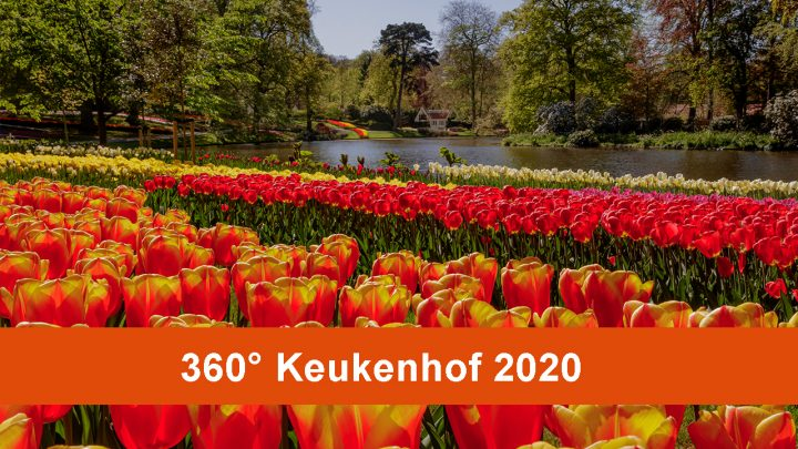 360° video through Keukenhof