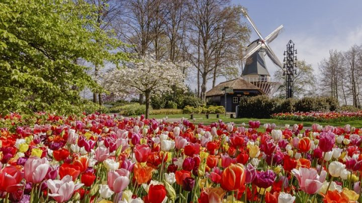 Keukenhof not permitted to open on 20 March 2021